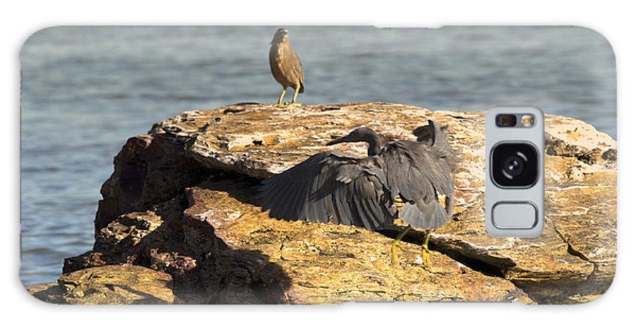 Dark Reef Egret Galaxy S8 Case featuring the photograph Challenge For The Throne by Douglas Barnard