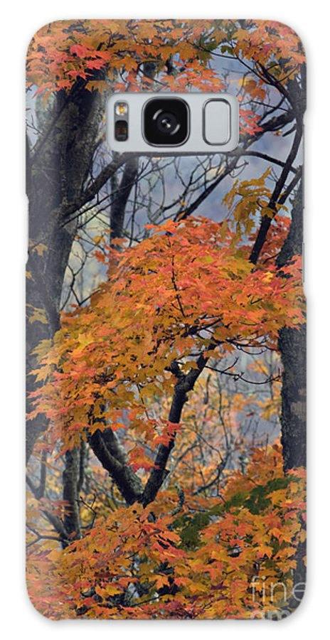 Autumn Galaxy S8 Case featuring the photograph Cherohala Maple - D007676 by Daniel Dempster