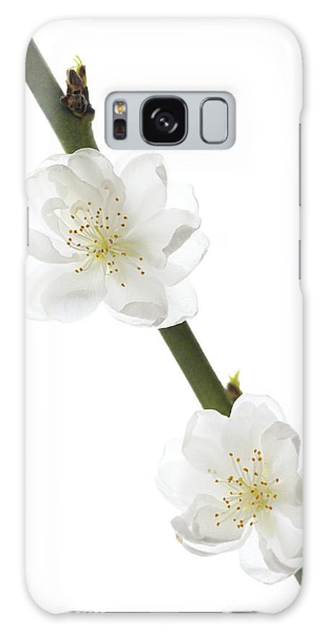 Prunus Sp. Galaxy S8 Case featuring the photograph Cherry Blossom (prunus Sp.) by Gavin Kingcome