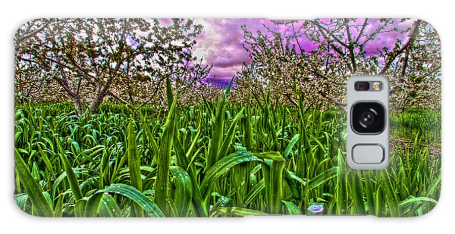 Cherry Orchard Galaxy S8 Case featuring the photograph Cherry Orchard After The Storm by Christine Statt