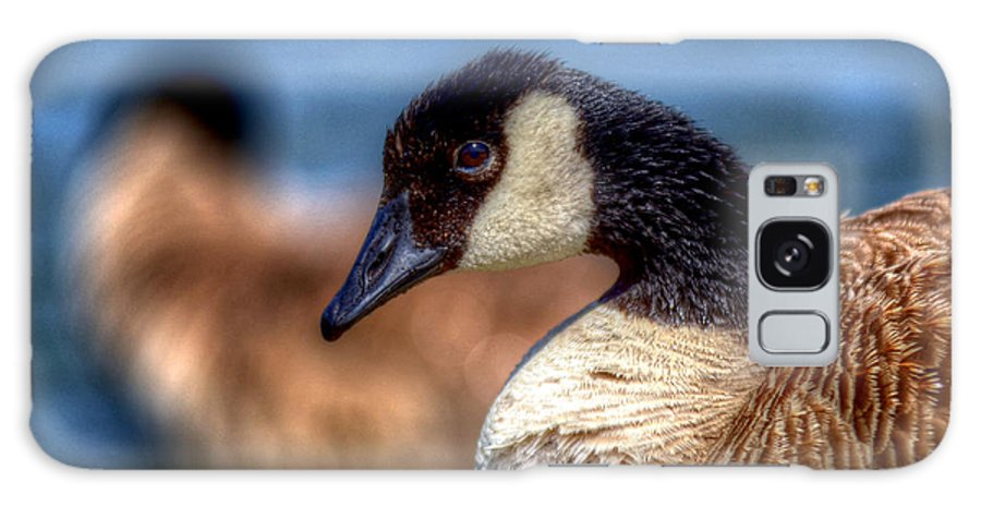 Geese Galaxy S8 Case featuring the photograph Chillin by Craig Incardone