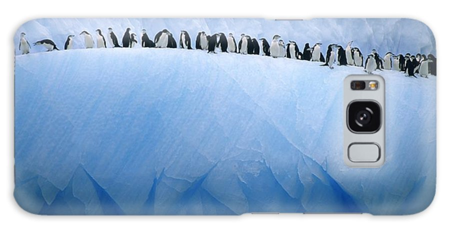 Antarctica Galaxy S8 Case featuring the photograph Chinstrap Penguins Lined by Ralph Lee Hopkins
