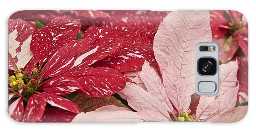 Christmas Galaxy S8 Case featuring the photograph Christmas Poinsettias by Michael Peychich