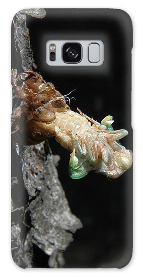 Cicada Galaxy S8 Case featuring the photograph Cicada - First In Series by Doris Potter
