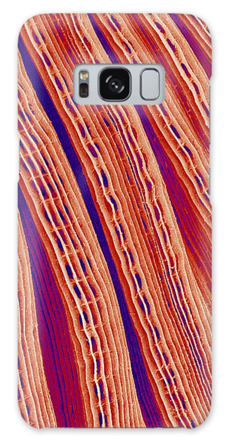 Bivalve Galaxy S8 Case featuring the photograph Clam's Gill, Sem by Susumu Nishinaga