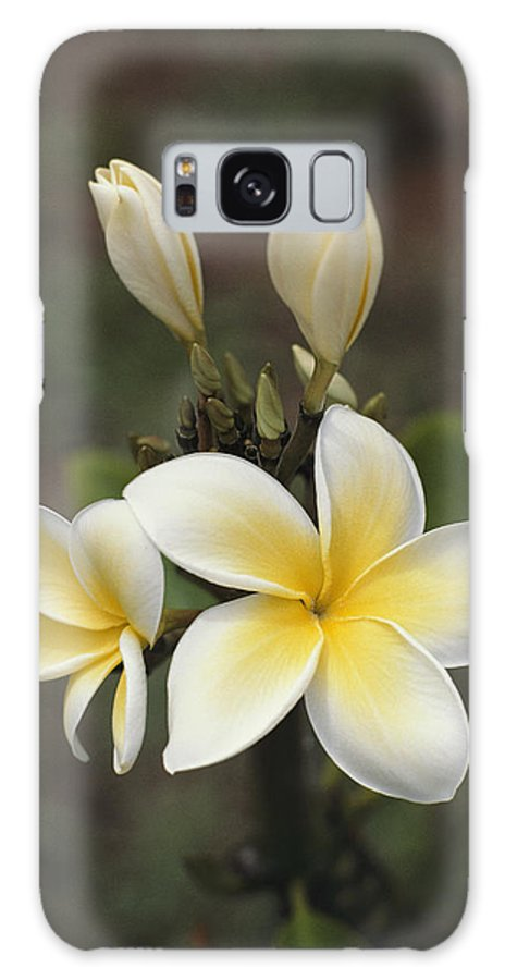 Plants Galaxy S8 Case featuring the photograph Close View Of Frangipani Flowers by Ira Block