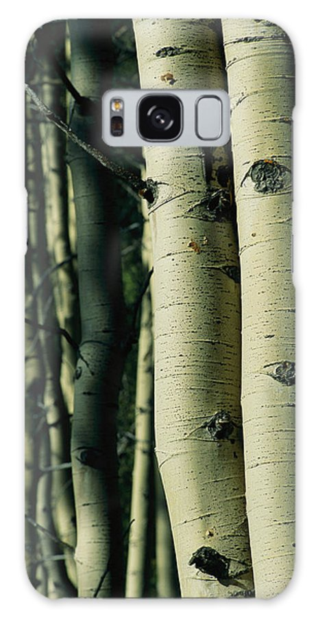 North America Galaxy S8 Case featuring the photograph Close View Of Several Aspen Tree Trunks by Joel Sartore