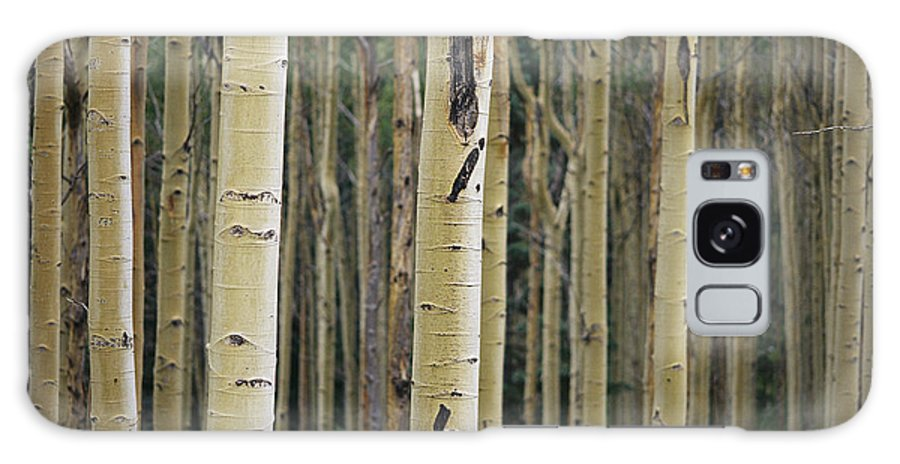 Plants Galaxy S8 Case featuring the photograph Close View Of Tree Trunks In A Stand by Raul Touzon