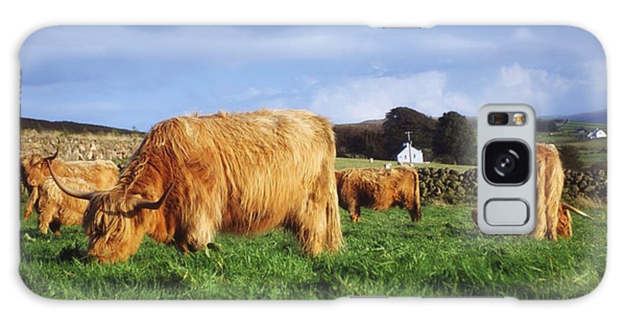 Animals Galaxy S8 Case featuring the photograph Co Antrim, Ireland Highland Cattle by The Irish Image Collection