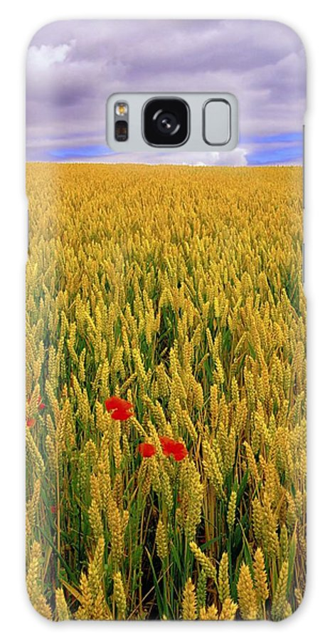 Beauty In Nature Galaxy S8 Case featuring the photograph Co Waterford, Ireland Poppies In A by The Irish Image Collection