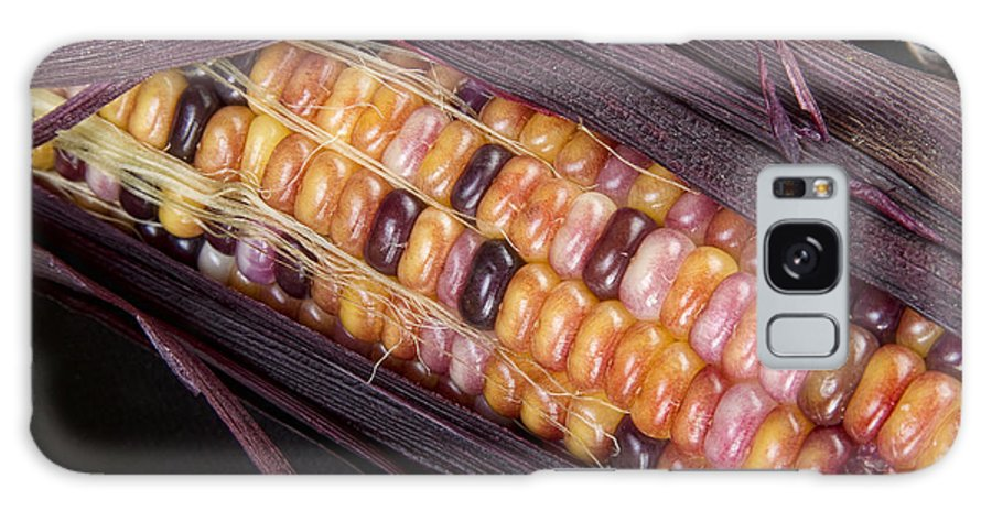 Corn Galaxy S8 Case featuring the photograph Colorful Indian Corn by James BO Insogna