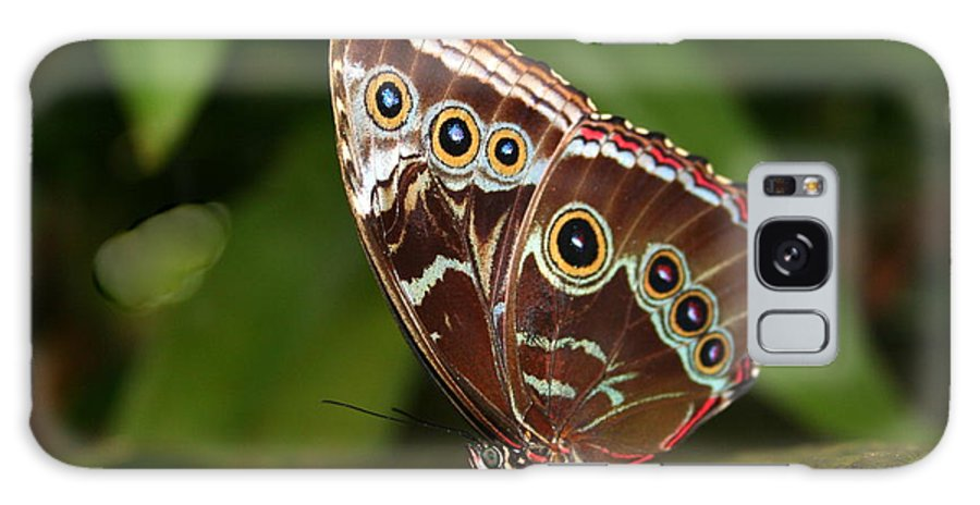 Morpho Peleides Galaxy S8 Case featuring the photograph Common Blue Morpho by Laurel Talabere