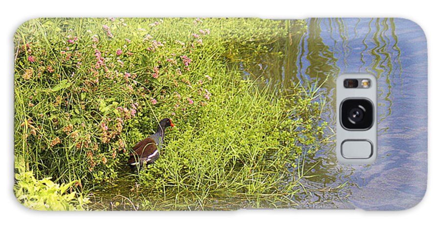 Roena King Galaxy S8 Case featuring the photograph Common Moorhen At The Waters Edge by Roena King