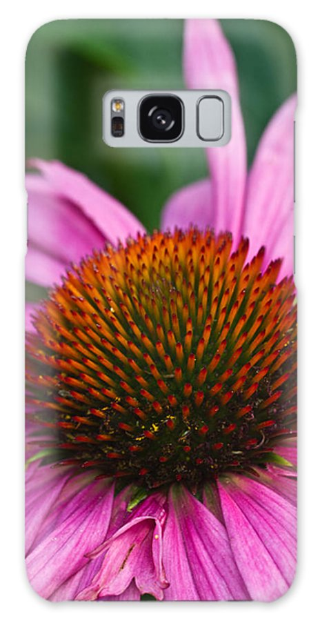 Cone Galaxy S8 Case featuring the photograph Cone Flower by Douglas Barnett