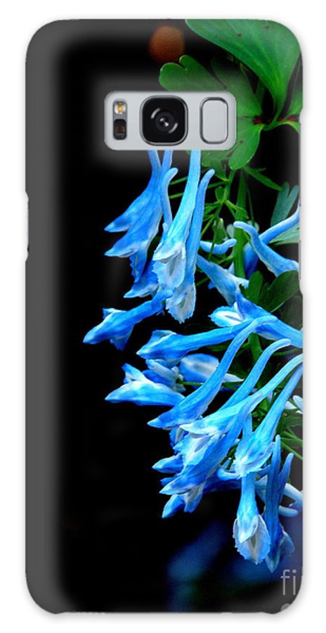 Corydalis Galaxy S8 Case featuring the photograph Corydalis by Tanya Searcy