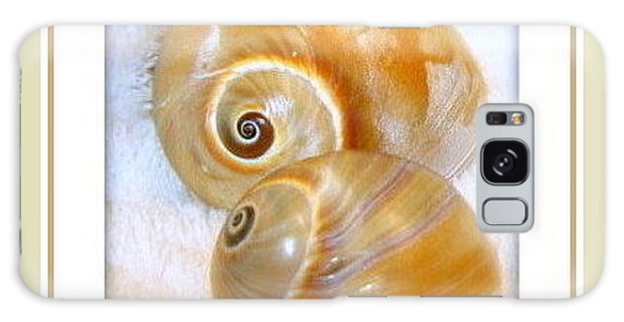 Shells Greeting Cards Galaxy S8 Case featuring the photograph Cosy Cuddles by Danielle Parent