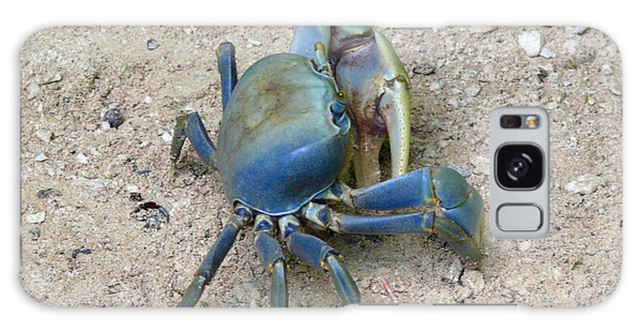 Crab Galaxy S8 Case featuring the photograph Crab by Tilen Hrovatic