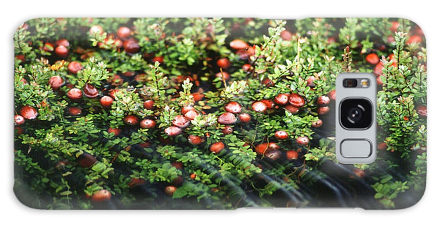 Cranberry Galaxy S8 Case featuring the photograph Cranberry Bog by Science Source