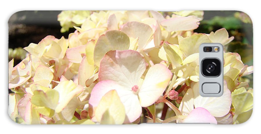 Nature Galaxy S8 Case featuring the photograph Cream Pink Hydrangea Flowers Art Prints Floral by Baslee Troutman