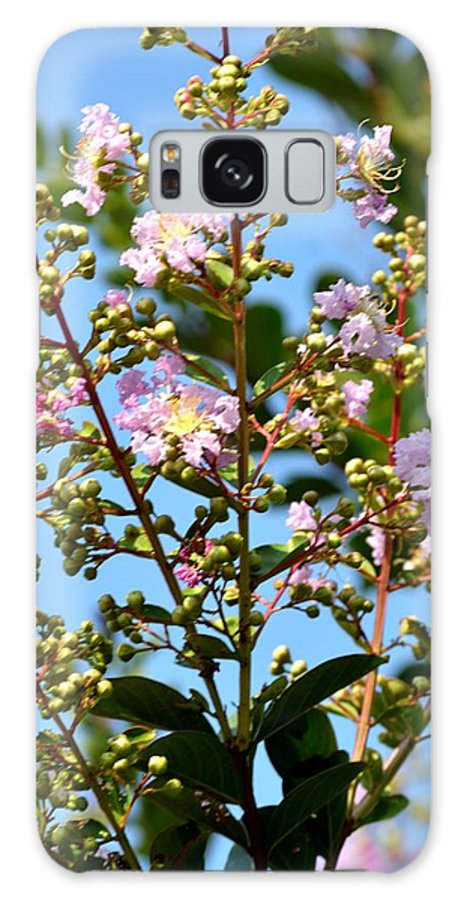 Crepe Mertle Galaxy S8 Case featuring the photograph Crepe Mertle In Bloom by Maria Urso