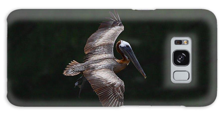 Brown Pelican Galaxy S8 Case featuring the photograph Cruising by Barbara Bowen