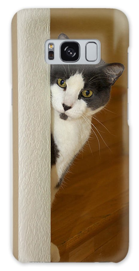 Cat Galaxy S8 Case featuring the photograph Curious Cat by Diana Haronis