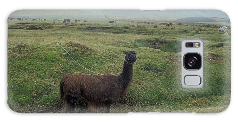 Ecuador Galaxy S8 Case featuring the photograph Curious Llama Ecuador South America by John Mitchell