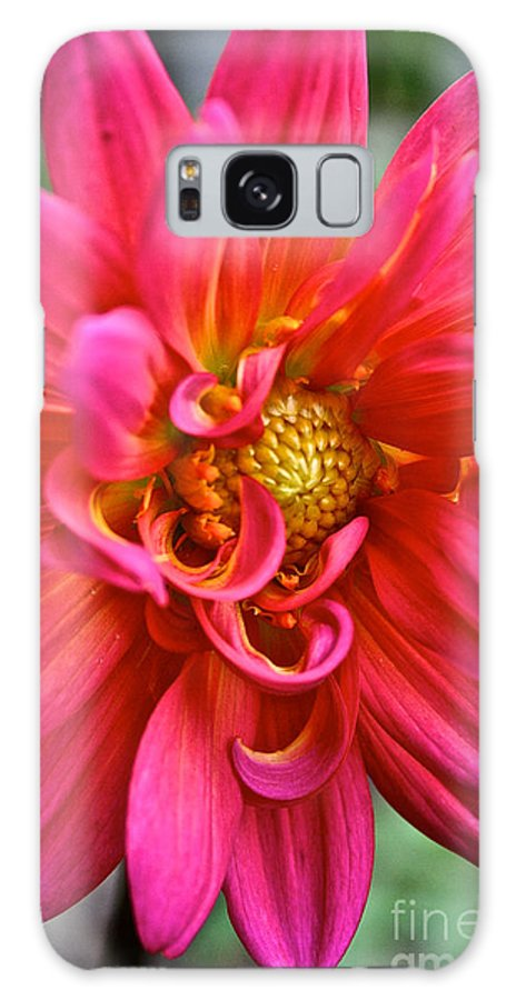 Garden Galaxy S8 Case featuring the photograph Curly Dahlia by Susan Herber