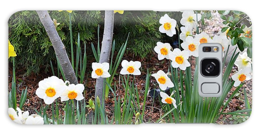 Daffodil Galaxy S8 Case featuring the photograph Daffodil Garden by P S