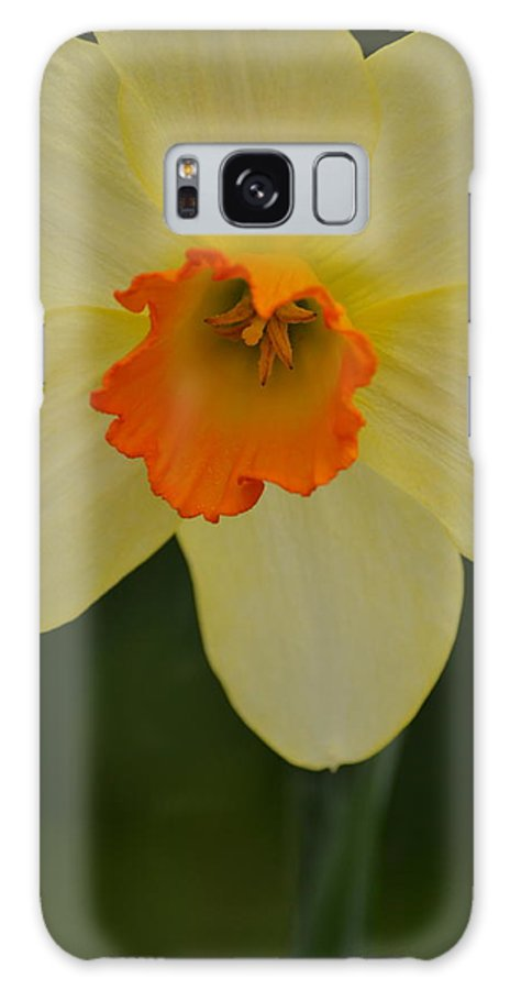 J.d. Grimes Galaxy S8 Case featuring the photograph Daffodilicious by JD Grimes