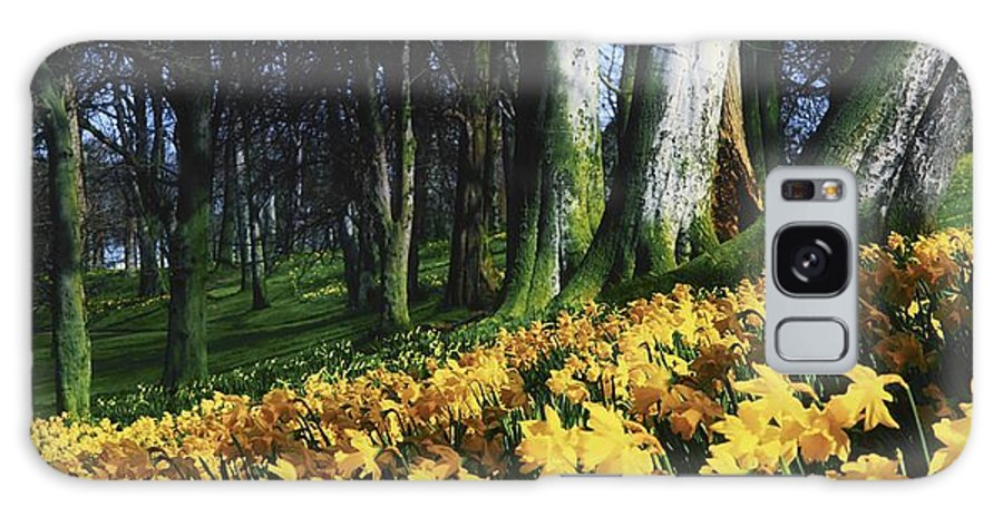 Day Galaxy S8 Case featuring the photograph Daffodils Narcissus Flowers In A Forest by The Irish Image Collection