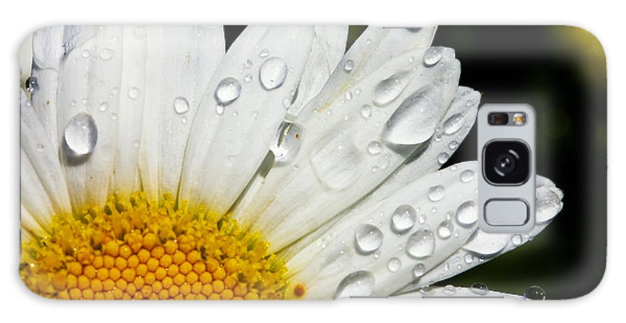 Floral Galaxy S8 Case featuring the photograph Daisy Drops by Rick Berk