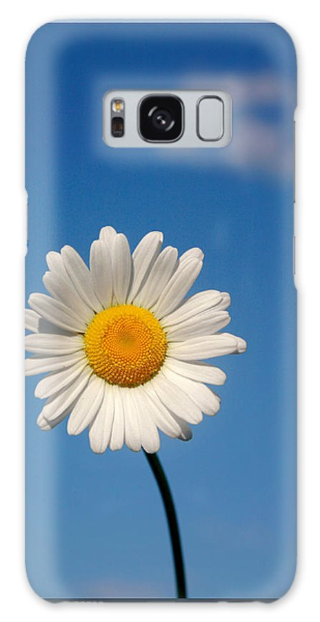 Daisy Galaxy S8 Case featuring the photograph Daisy In The Sky by Cindy Haggerty