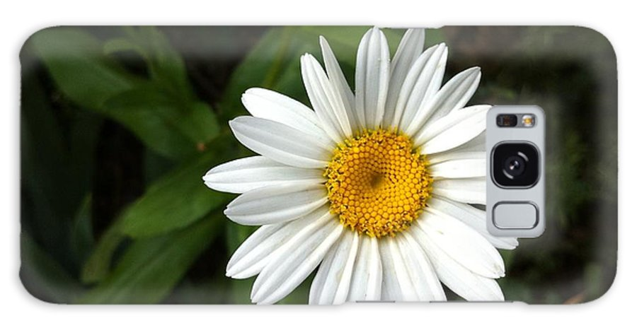 Galaxy S8 Case featuring the photograph Daisy by Jessica Smith
