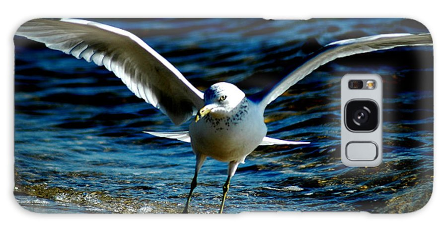 Seagull Galaxy S8 Case featuring the photograph Dance Move by David Weeks