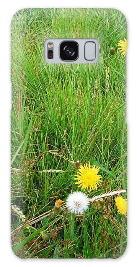 Flowers Galaxy S8 Case featuring the photograph Dandylion by Charles Stuart