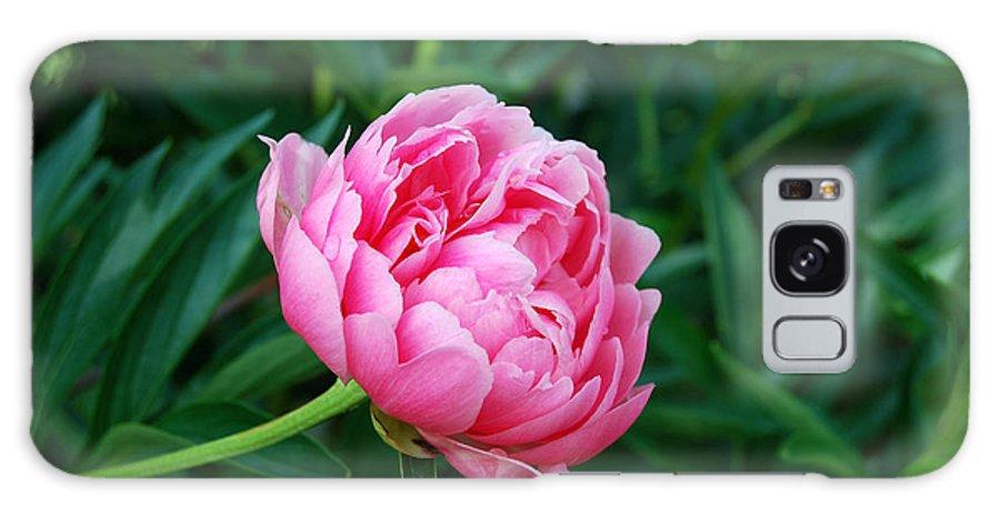 Dark Pink Peony Flower Galaxy S8 Case featuring the digital art Dark Pink Peony Flower Series 2 by Eva Kaufman