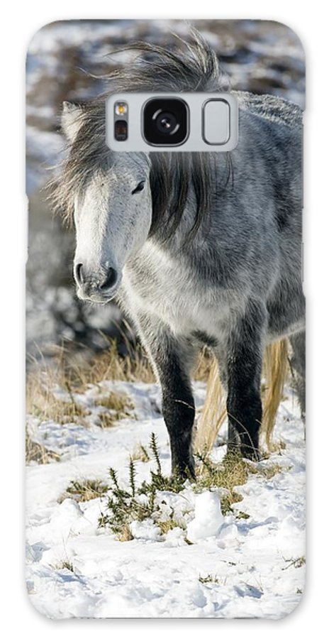 Equus Caballus Galaxy S8 Case featuring the photograph Dartmoor Pony by Adrian Bicker