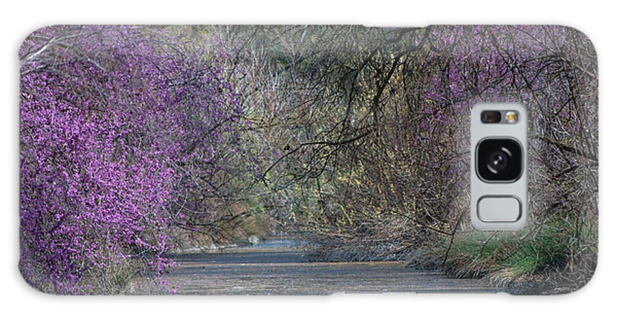 Davis Galaxy S8 Case featuring the photograph Davis Arboretum Creek by Diego Re