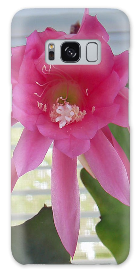 Cactus Galaxy S8 Case featuring the photograph Day Blooming Cactus by Pamela Patch