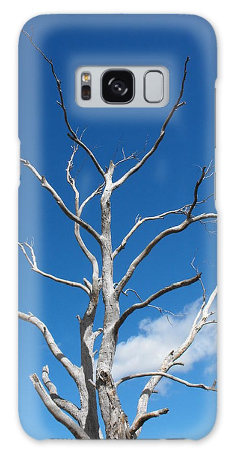 Tree Galaxy S8 Case featuring the photograph Dead Wood by Marlene Challis