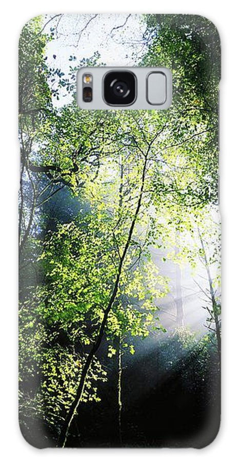 Calm Galaxy S8 Case featuring the photograph Deciduous Wood, Killarney National by The Irish Image Collection