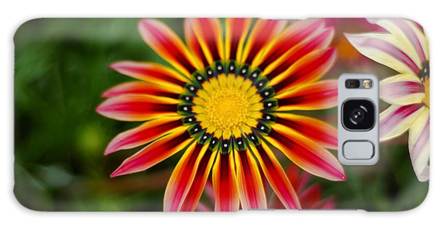 Flower Galaxy S8 Case featuring the photograph Delicate Designs by Syed Aqueel