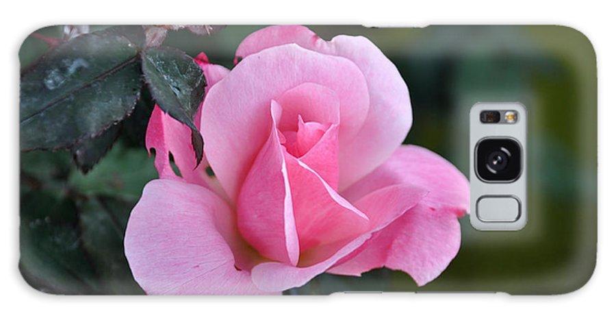 Teresa Blanton Blanton Galaxy S8 Case featuring the photograph Delicate Pink Rose by Teresa Blanton
