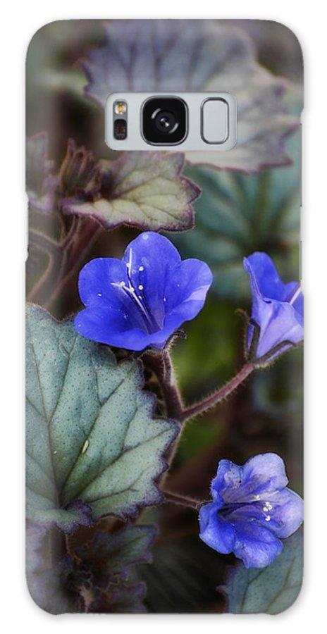Desert Bluebells Galaxy S8 Case featuring the photograph Desert Bluebells by Saija Lehtonen