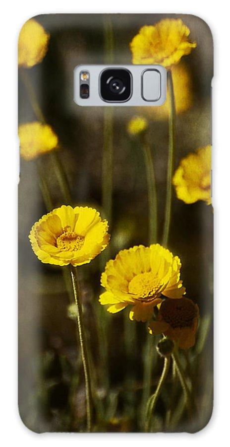 Desert Marigold Galaxy S8 Case featuring the photograph Desert Marigold by Saija Lehtonen