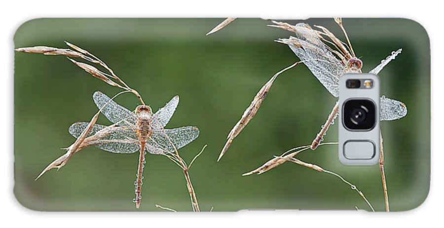 Animal Galaxy S8 Case featuring the photograph Dew Covered Dragonflies by Dean Pennala