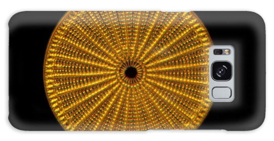 Alga Galaxy S8 Case featuring the photograph Diatom Alga, Arachnoidiscus by Eric Grave