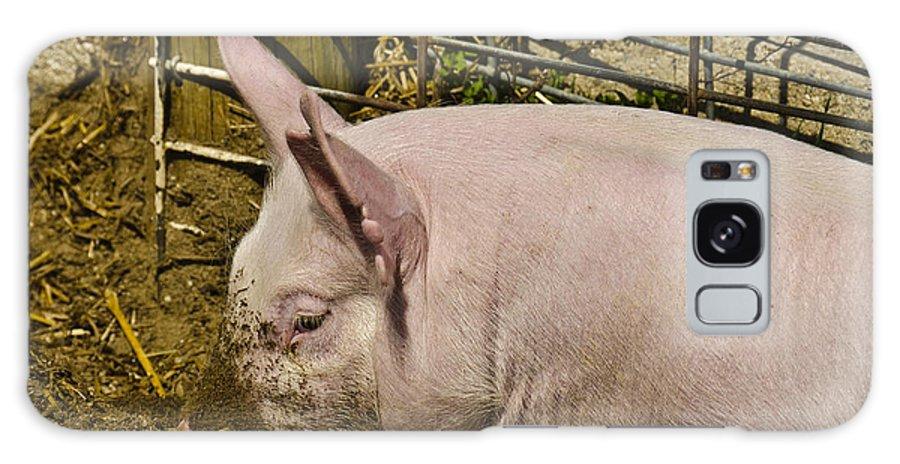 Usa Galaxy S8 Case featuring the photograph Dirty Piggy by LeeAnn McLaneGoetz McLaneGoetzStudioLLCcom