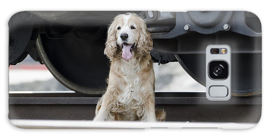 Dog Galaxy S8 Case featuring the photograph Dog Under A Train Wagon by Mats Silvan